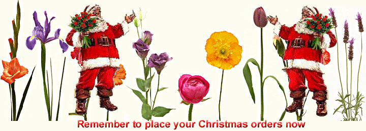 Flowers from South African Florist - Flora Niche Florist in South Africa