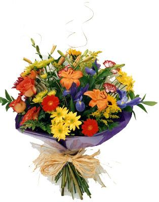 Flora Niche African-Rainbow of Joy-Long Stemmed Cut Flowers