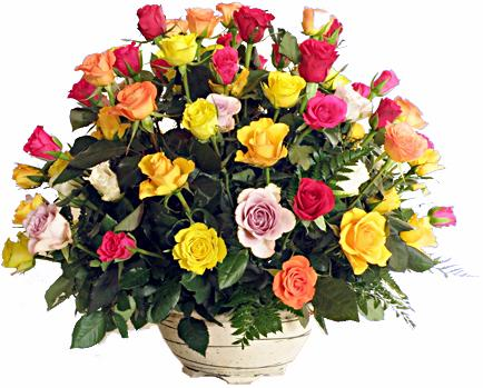 Flora Niche African-Best in the house<br>A bowl of 60 mixed roses-