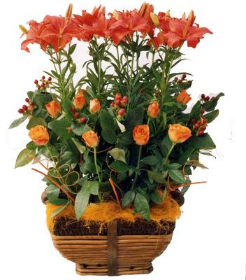 Flora Niche South Africa-African Skye-A modern arrangement of Roses and Lilies