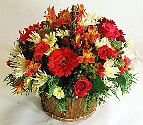Flora Niche South Africa-Red and White Delight-