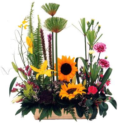 Flora Niche African-Nature's Choice-Modern Look arrangement
