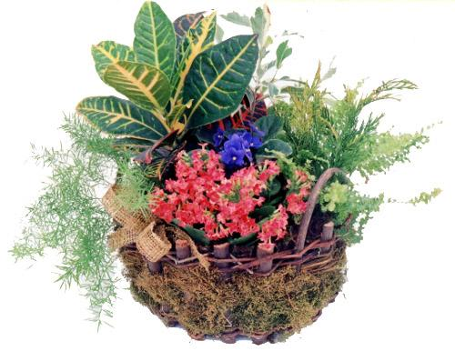 Flora Niche South Africa-Growing Garden Planter-Basket of Mixed Plants