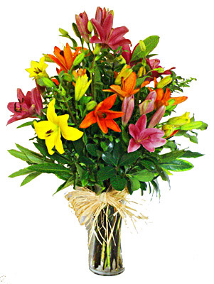 Flora Niche South Africa-Mixed Lillies in Vase-Medium - 10 stems, Large - 15 stems