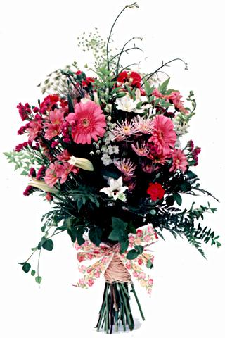 Flora Niche African-Mixed Pinks Country Bunch-Long Stemmed Cut Flowers